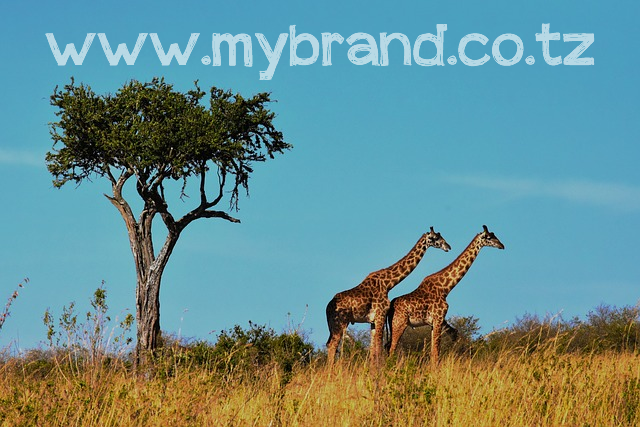 #Brands #DomainNames en #Tanzanie : le #ccTLD .co.tz obligatoire pour tout #business #online sur son territoire !