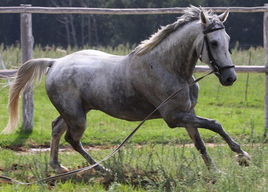 Les dépôts de marques et les noms de chevaux : une étonnante ressemblance