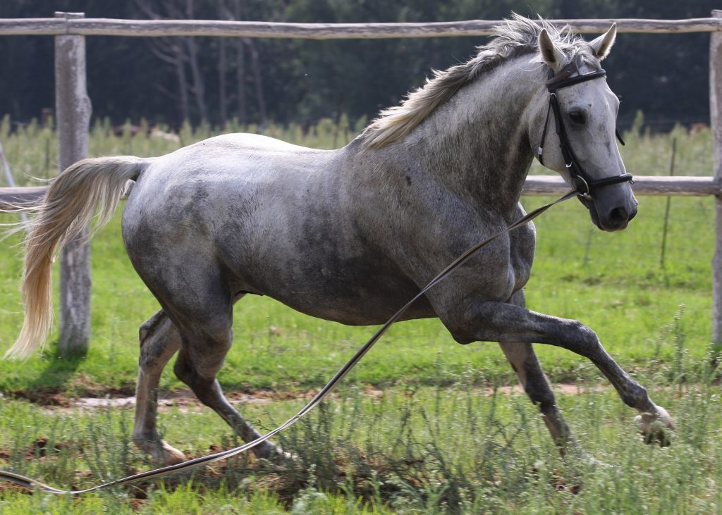 How horse names resemble trademarks