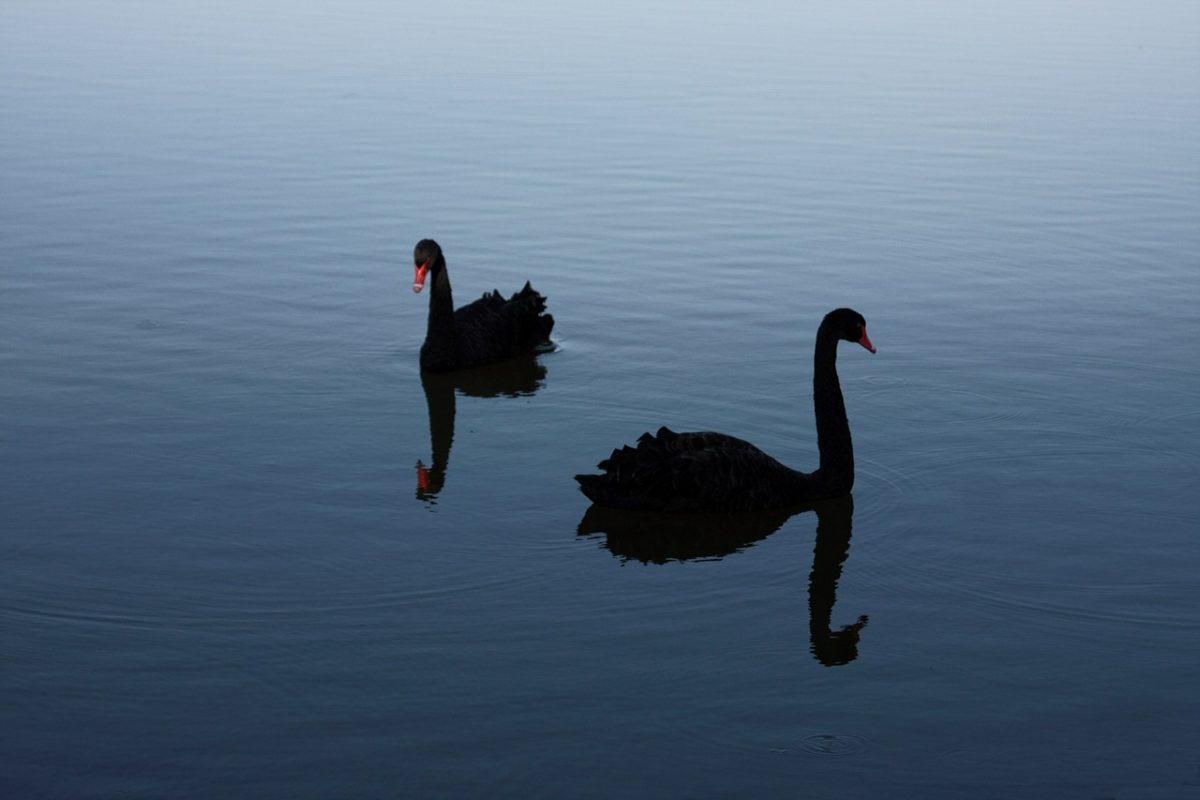 The Black swan time?
